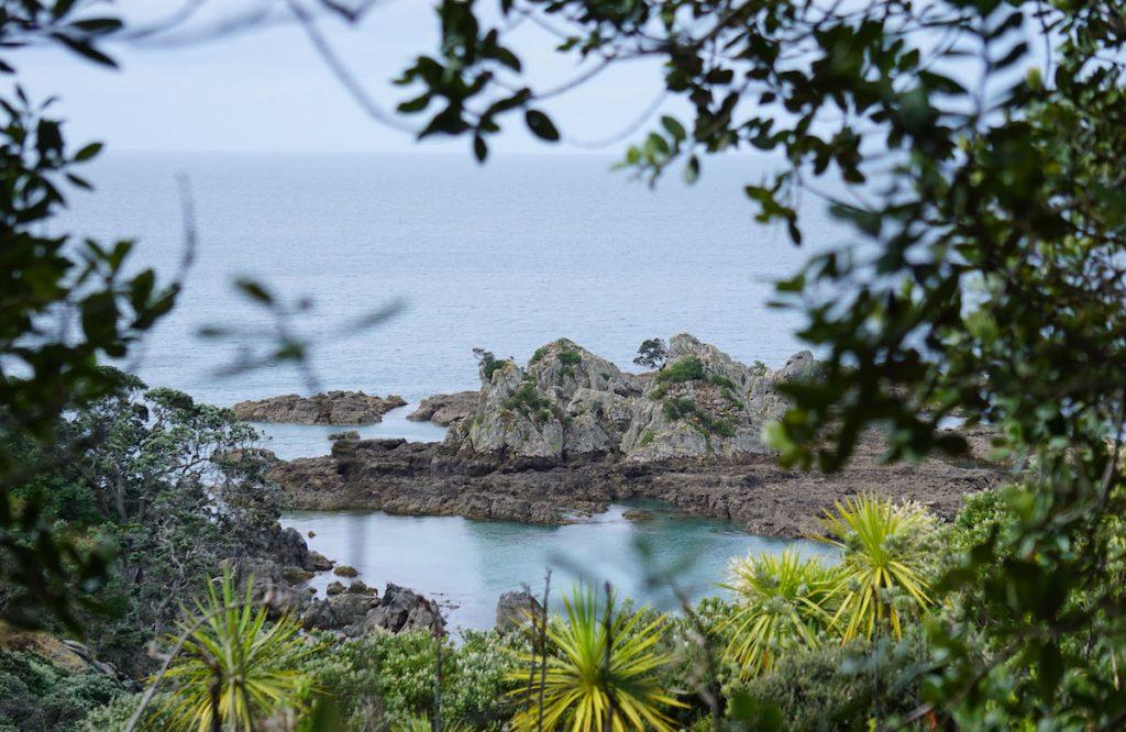 Küste von Tiritiri Matangi Island