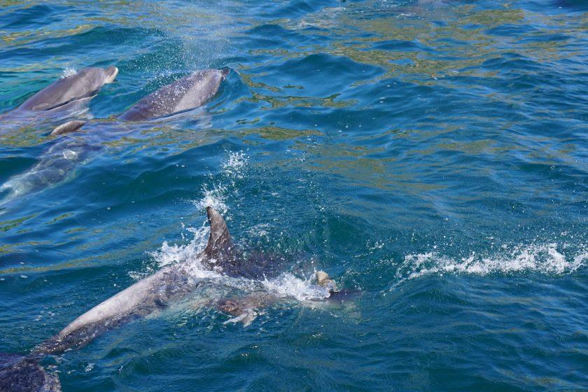 Delphine Neuseeland